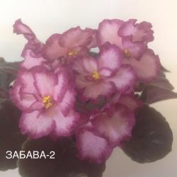 Фиалка ПН-ЗАБАВА-2
