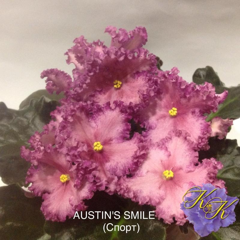 Фиалка AUSTIN'S SMILE