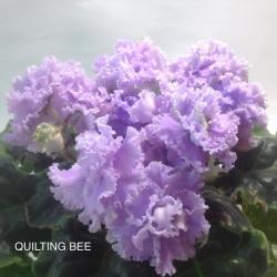 Фиалка QUILTING BEE
